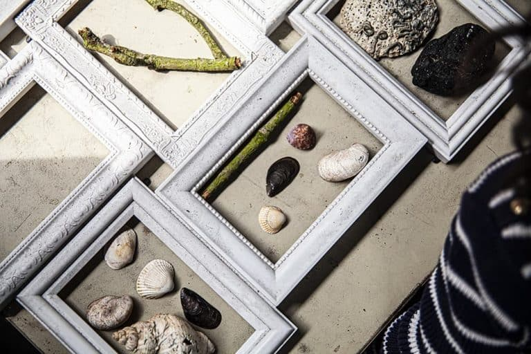Sea shells in frames