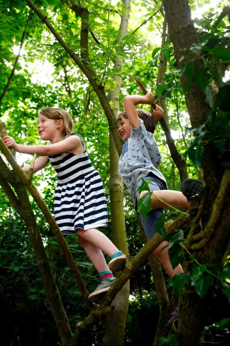 Two children climbing a tree