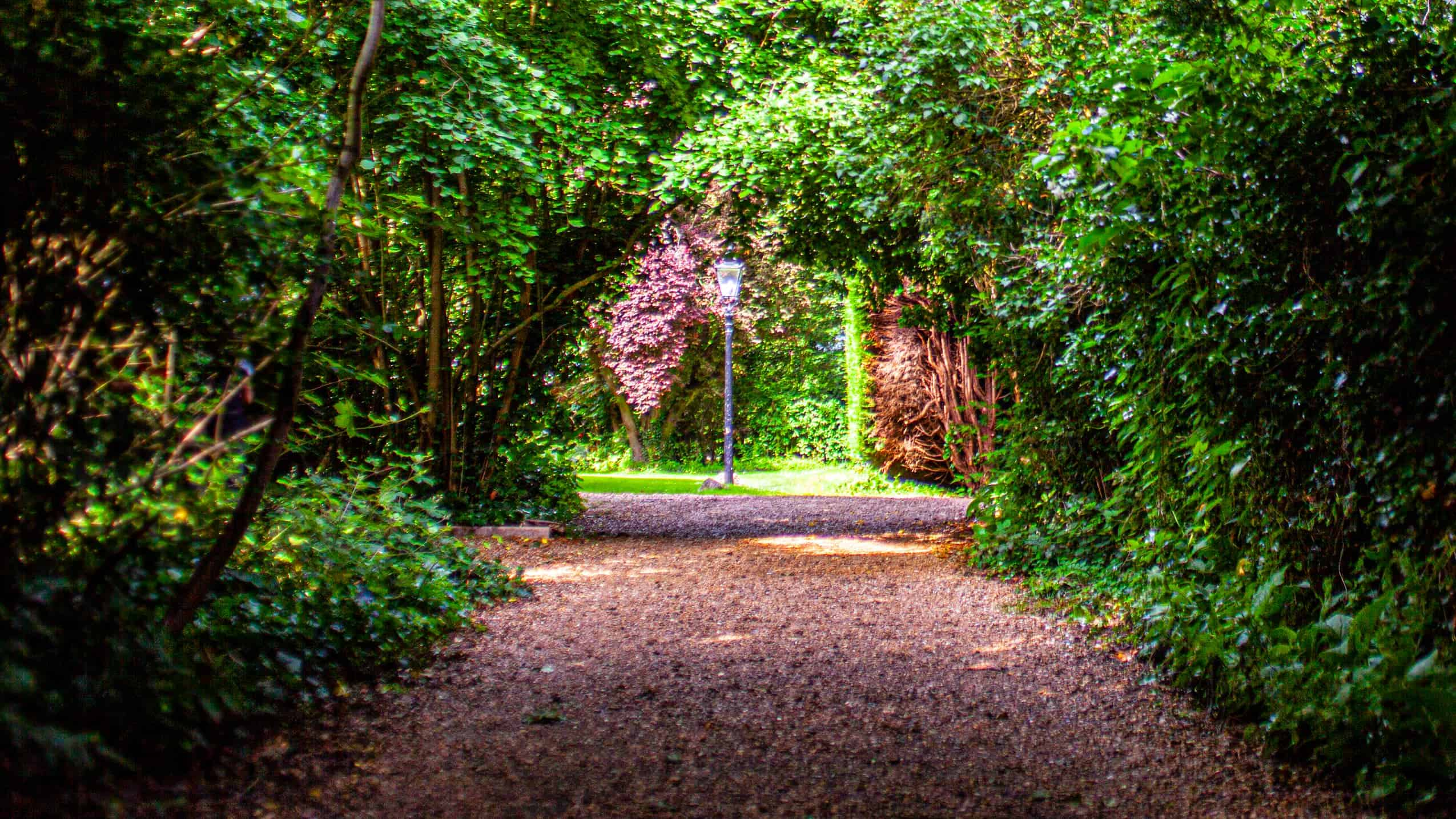 The leafy lane that leads to Millington Road Nursery School
